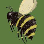 Пчелата водач